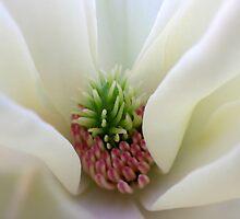Saucer Magnolia by Kate Eller