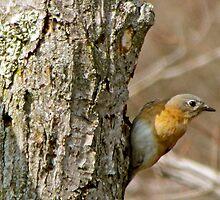 Mama Bluebird by Nancy Rohrig