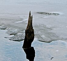 Reflections on the ice by Nancy Rohrig