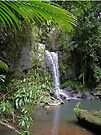 Curtis Falls, Tamborine N.P., Queensland by Margaret  Hyde