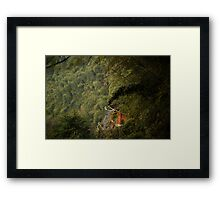 bamboo sea ........ Framed Print