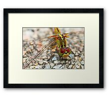 Yellow Dragonfly Face Framed Print