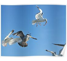 flock of sea gulls Poster