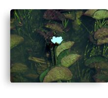 Water Lily, Margaret River Canvas Print