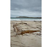 Driftwood at Jolly's Beach Photographic Print