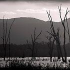 Dead Trees by crickmedia