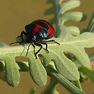Red and blue  Beatle by bobby1
