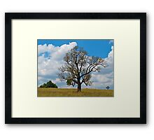 Lone tree hill-Hunter Valley NSW Framed Print