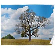 Lone tree hill-Hunter Valley NSW Poster