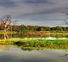 Wetlands Magic - Wonga Wetlands, Albury Australia - The HDR Experience by Philip Johnson