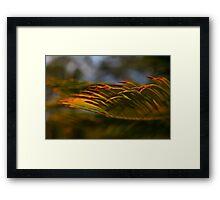 Golden waves-sunset Hunter Valley Framed Print