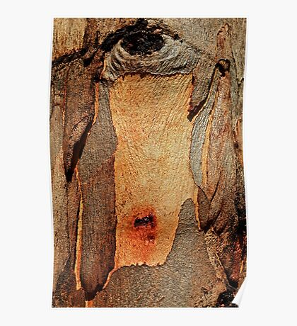 Bleeding Bark-Gum trunk in the sun Poster