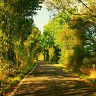 Sunny Country Lane by MichelleRees
