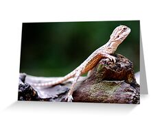 Bearded Dragon - Juvenile Greeting Card
