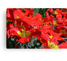 Field of Red and Yellow Canvas Print