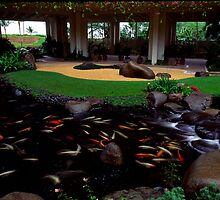 garden fish pond by coastwind