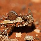 The Thorny Devil- Moloch Horridus by Chris Paddick