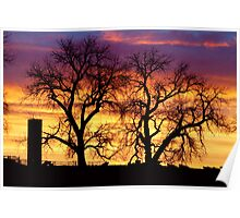 Country Cow Sunrise  Poster