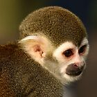 Squirrel Monkey Close up. by Mark Hughes
