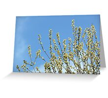 Goat Willow Close-up Greeting Card