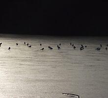 Birds, Virginia Water  by Rob Mullins