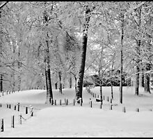 The Beauty Of Winter by jules572