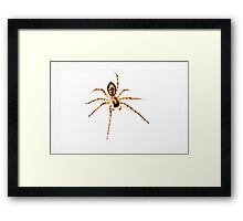 There came a big spider! Framed Print
