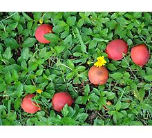palm fruit Photographic Print
