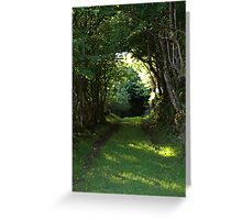 A woodland walk Greeting Card