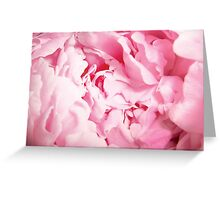 Pink Peony Rose Closeup Greeting Card