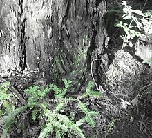 Growing Redwood by eruppe