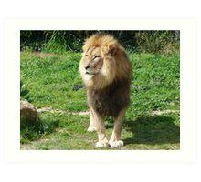 King of the jungle Art Print