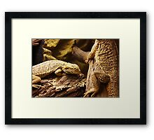 Bearded dragons Framed Print