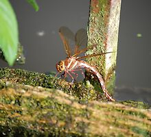 Dragonfly By The Water by vixteruk
