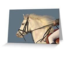 White Connemara Stallion Greeting Card