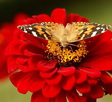 Dancing among the Zinnias by KatWolfe