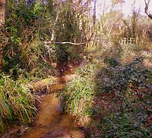 Woodland stream with bridge in Upton Wood by Songwriter