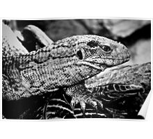 Bosc Monitor Poster