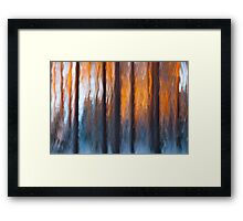Last sunshine hits the edge of the forest Framed Print