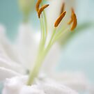 Lily white by Mandy Disher