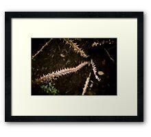River Of Thorns Framed Print