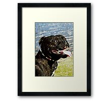 Doggy smile - cheese for the camera Framed Print