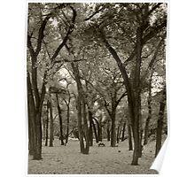 Abiquiu Fall Cottonwoods Poster