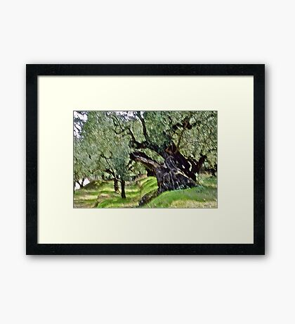 Olive trees - Zakintos  Greece. by Brown Sugar . Views (406) Thank you friends ! Framed Print