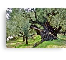 Olive trees - Zakintos  Greece. by Brown Sugar . Views (406) Thank you friends ! Canvas Print