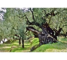 Olive trees - Zakintos  Greece. by Brown Sugar . Views (406) Thank you friends ! Photographic Print