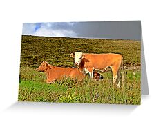 Red cows in an irish field Greeting Card