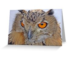 An Owls view Greeting Card