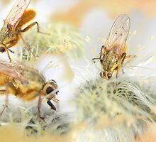 Foraging Flies by missmoneypenny
