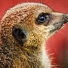Portrait of a Meerkat  by Selina Ryles